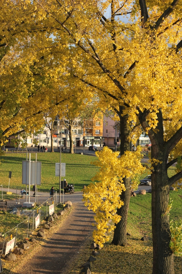 The city looked so beautiful with the fall colors. Here is a park we walked past just on the other side of the bridge.