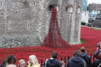 There is currently an art installation going on with ceramic poppies. Every poppy represents a British soldier who was killed during WWI.