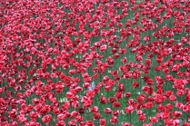 I was disappointed to learn that the poppies were not real.